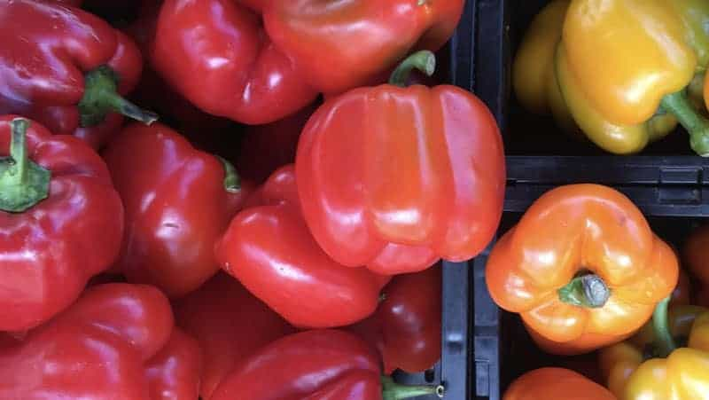 Bell Peppers Test Results