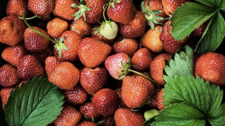 Strawberry Growers