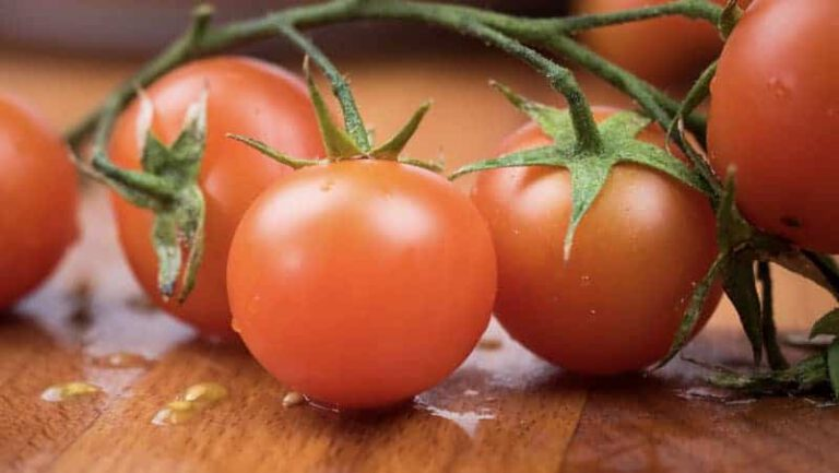 Cherry Tomato Test Results