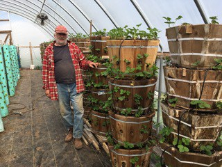 Vertical Strawberry Stacks With Increased Yield