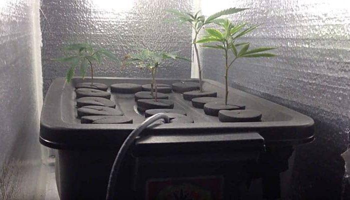 video-rooting-clones